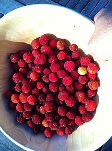 bowl of ripe strawberry tree fruits
