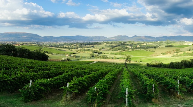 Genius Loci Sagrantino vineyards