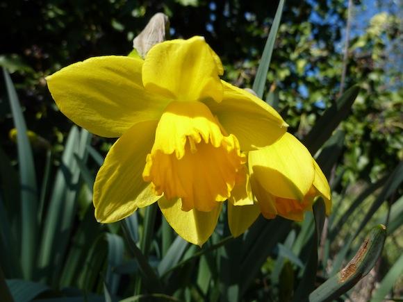 spring in Umbria