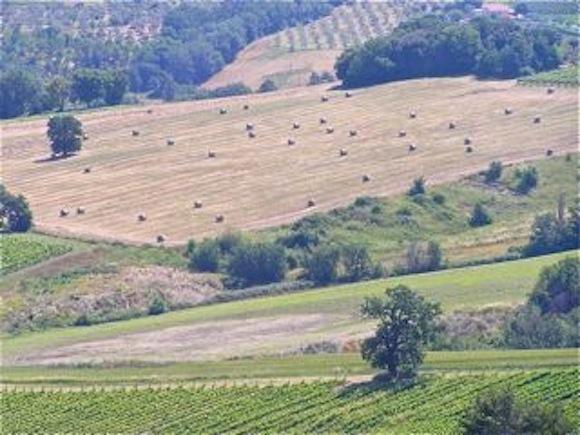 Umbria hay fields