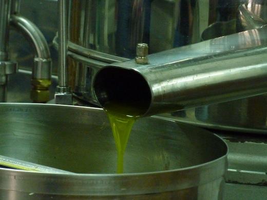 "Genius Loci organic ""early harvest"" extra virgin olive oil"
