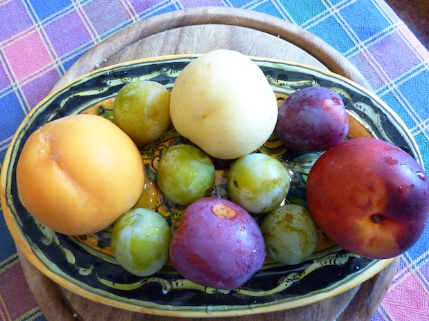 Umbria summer fruits from the garden