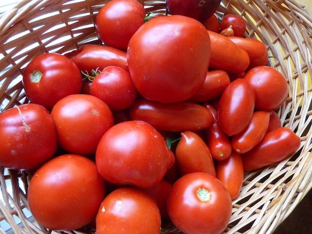gorgeous organic tomatoes