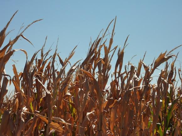 Umbria drought 2012