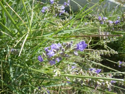 umbria flowers