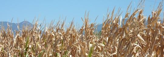 summer 2012 drought in umbria