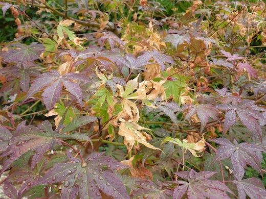 summer bushes in umbria