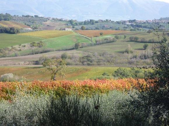 Genius Loci vineyards and olive trees in Umbria