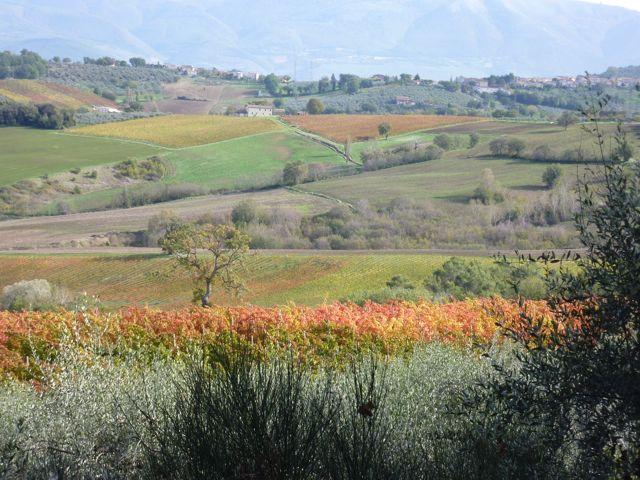 Fall view from Genius Loci Umbria