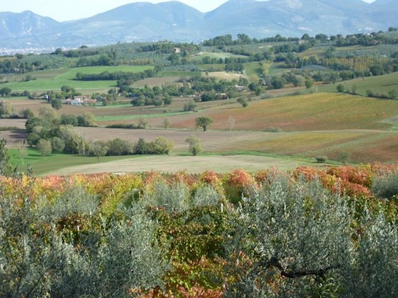 vineyards as seen from Genius Loci Bevagna Umbria