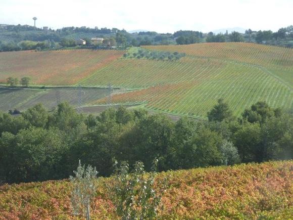 Red Sagrantino vineyard in November