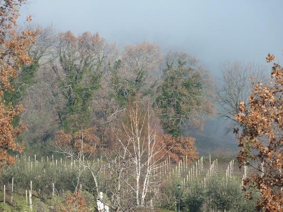 Genius Loci Umbria - birch tree