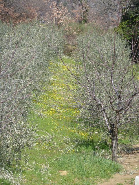 carpets of wildflowers at Genius Loci Umbria
