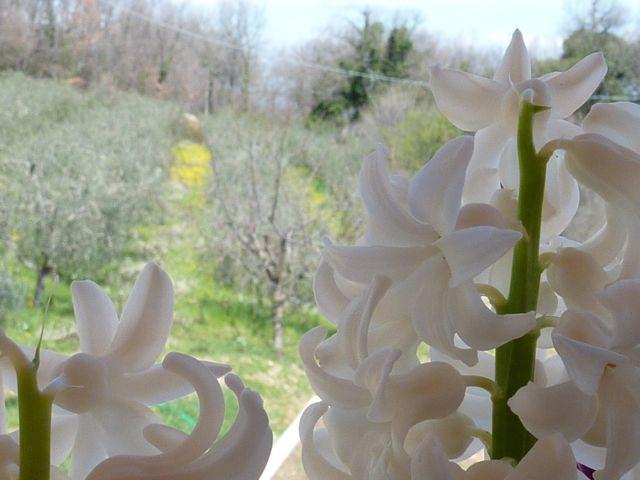 Spring at Genius Loci