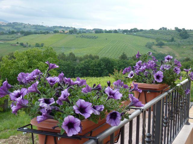 view from Genius Loci Umbria
