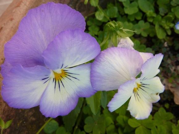 spring flowers at Genius Loci Umbria