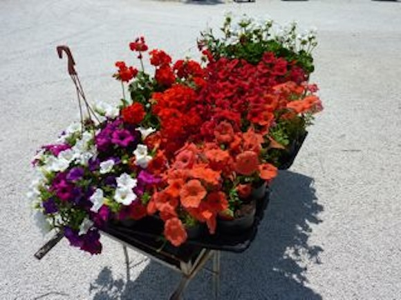 Genius Loci Umbria summer flowers
