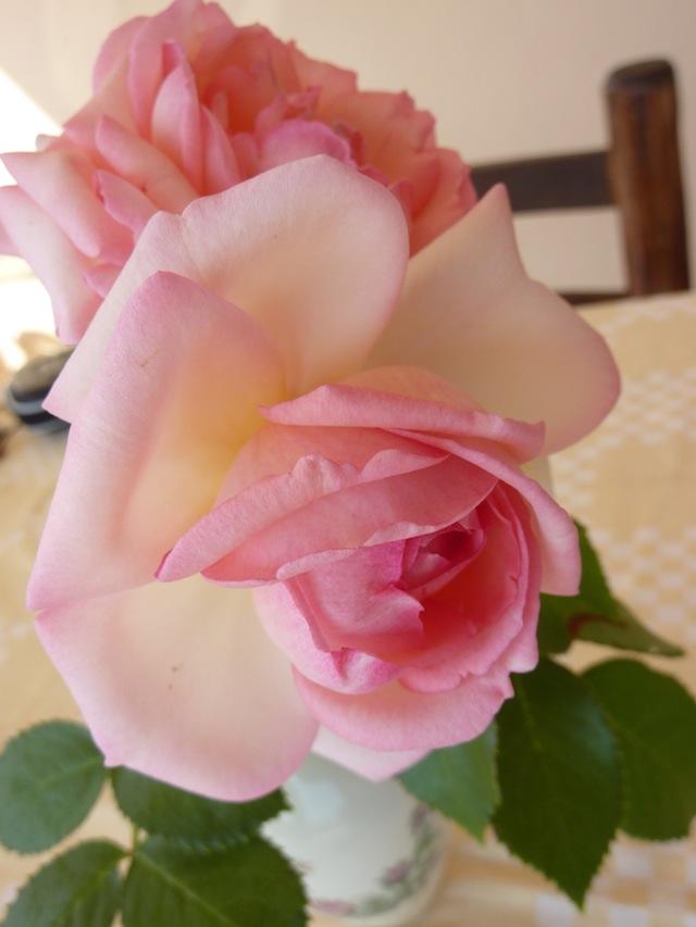 Umbrian summer roses