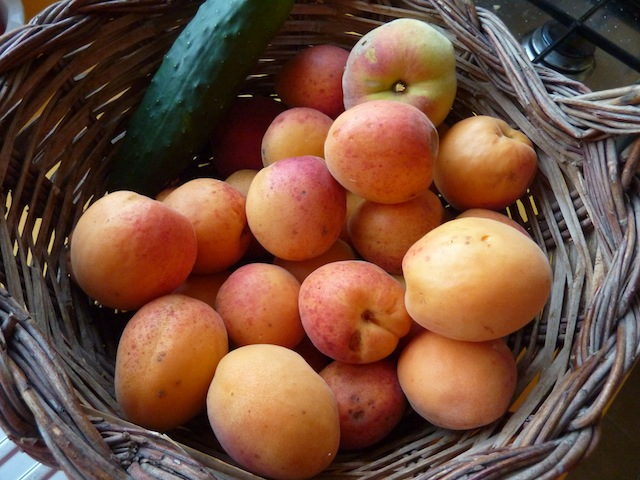 Umbrian apricots