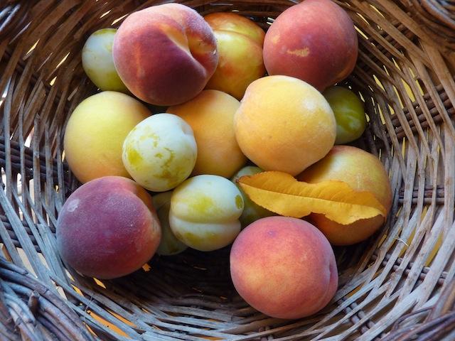 Umbrian peaches