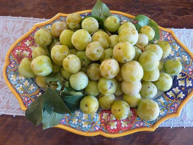 Umbrian summer plums