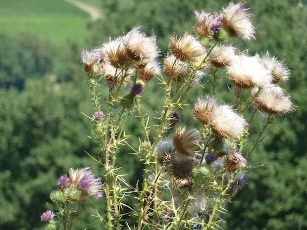summer Umbrian beauty