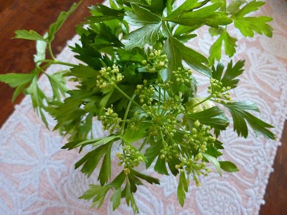 Umbrian summer herbs
