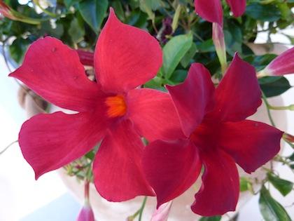 Umbria - summer flowers