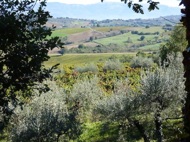 fall vineyards color in Umbria