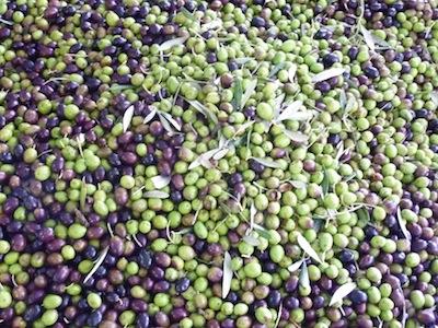 Genius Loci Umbria olive oil