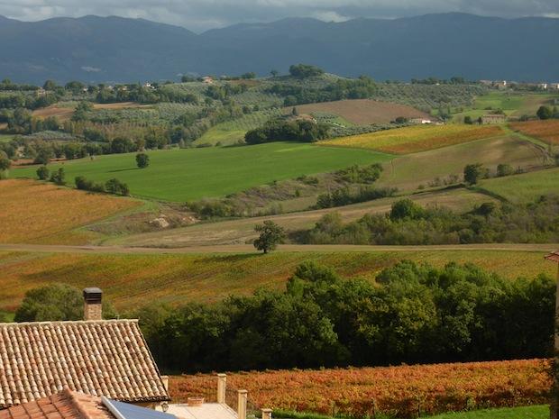 Sagrantino vineyards in the fall