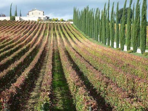 Sagrantino vineyards