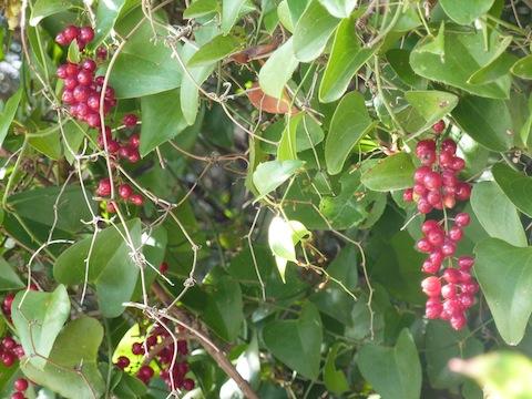 Umbria - wild berries