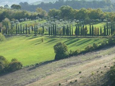 cypress trees umbria