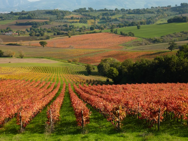 vineyards Umbria in the fall