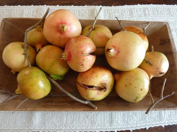 Umbrian pomegranates
