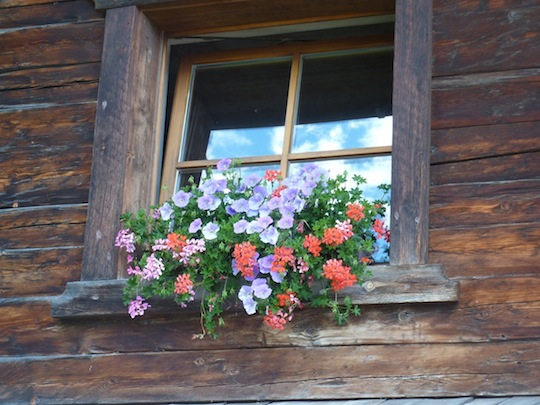 flowers and distressed wood, creating a beautiful contrast