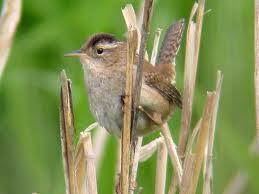 Umbria summer songbirds