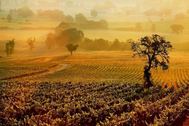 July light on the lush vineyards - Genius Loci Umbria